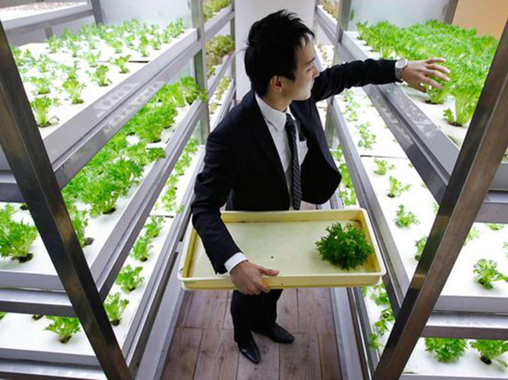 העובדים מקבלים הספקה טריה של מגוון ירקות ופירות