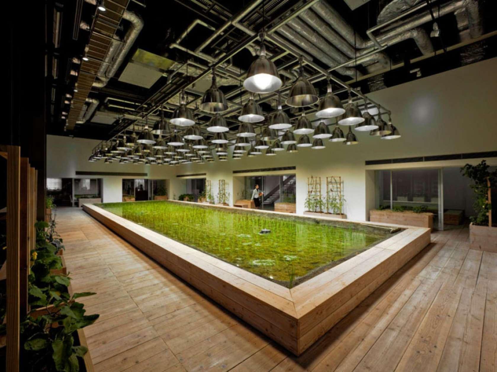 שדה אורז בקומת הלובי של המשרדים