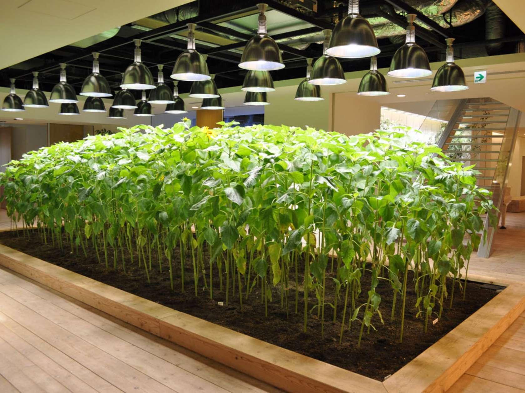 מיטות גידול מפוזרות ברחבי בניין המשרדים והחווה האורבנית